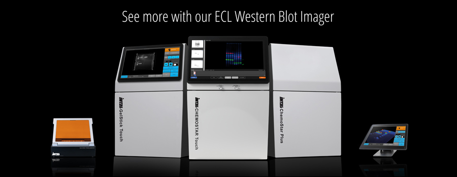 gel doc and western blot systems